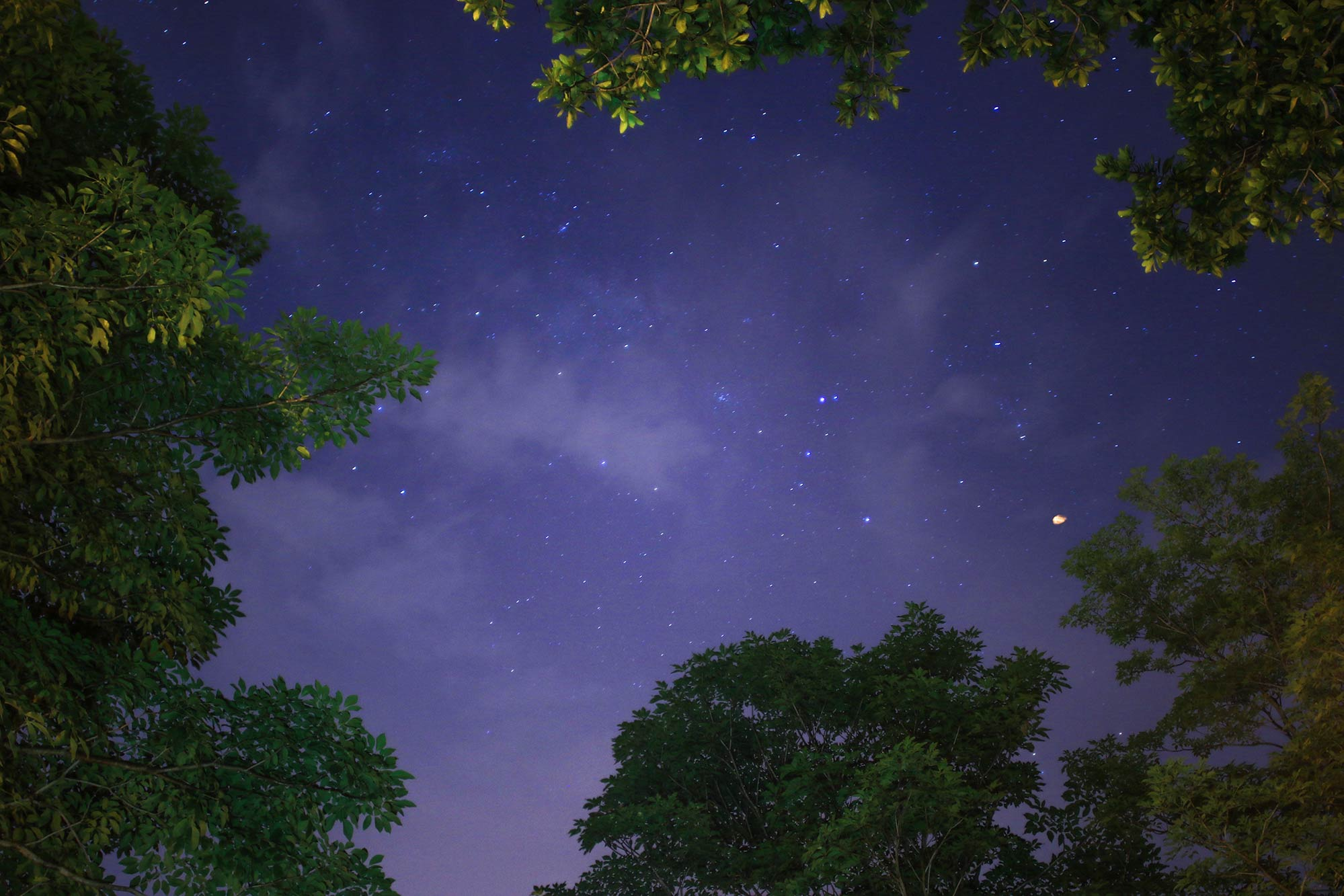 Trees under the stars at night